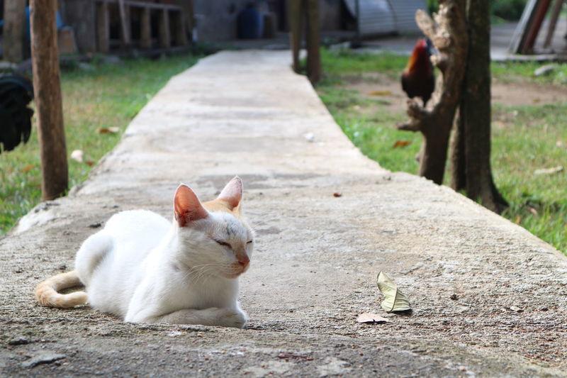 Pets Outdoors Day Nature Cat Backyard