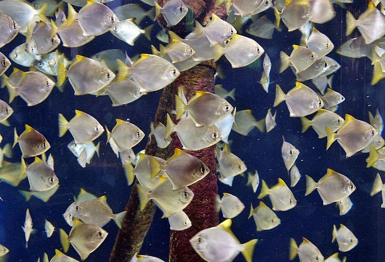 Acquario Acquariofilia Fish Fish-eye Lens Fishes Fisheye Fishing Peixes
