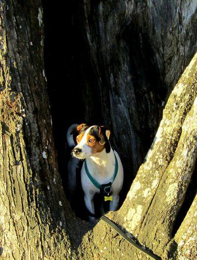 One Animal Tree Day Nature Our Dog Dansk-Svensk Gårdshund