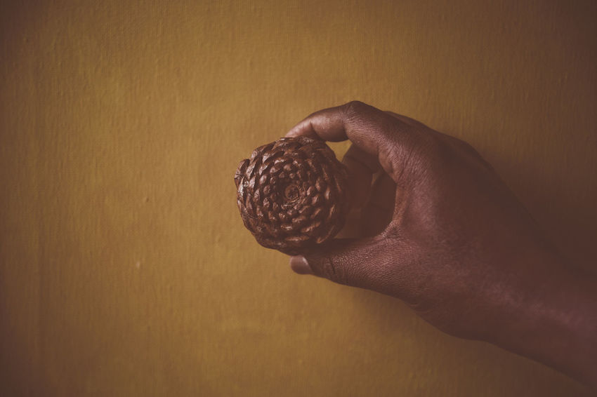 The Flower of Life Acorn Black Skin Pattern, Texture, Shape And Form Seasonal Seasons Greetings Seed Seed In Hand Skin