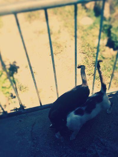 Cats Cat♡ Cute Cats Animals