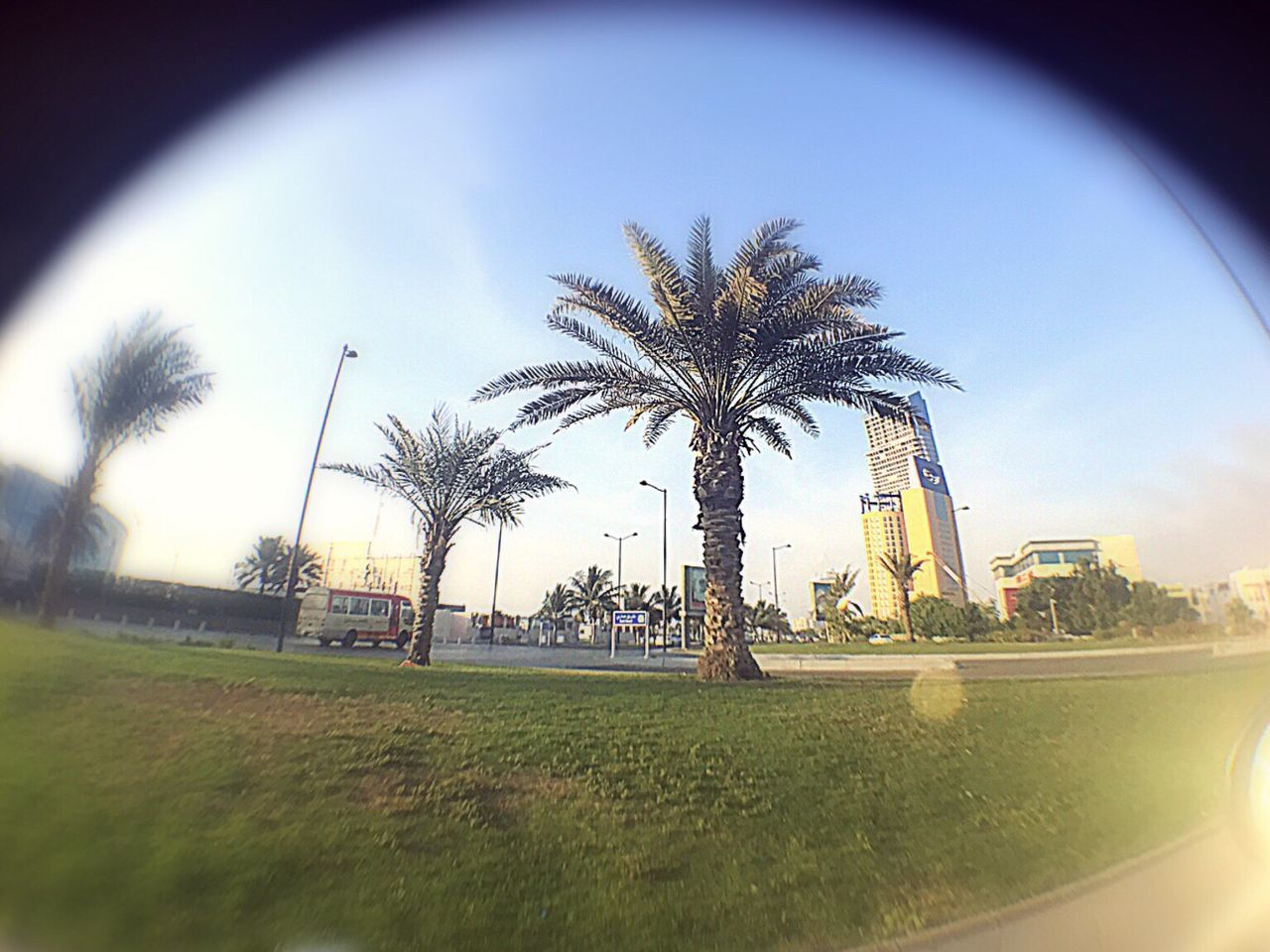 palm tree, sky, grass, tree, no people, day, outdoors, city, architecture, nature, close-up