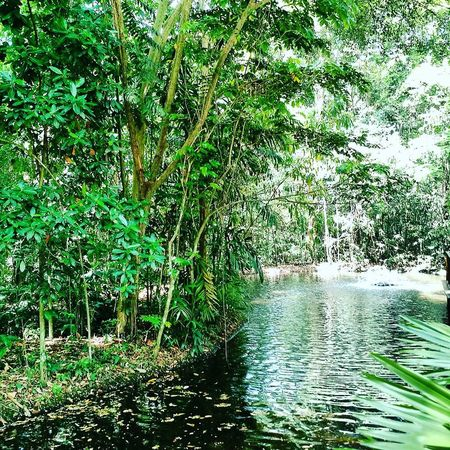 Nature Green Color Water Growth Beauty In Nature Tree No People Outdoors Tranquility Scenics Day Tranquil Scene Backgrounds Freshness Close-up Beauty In Nature Full Frame Illuminated High Angle View Leisure Activity FreeTime Free