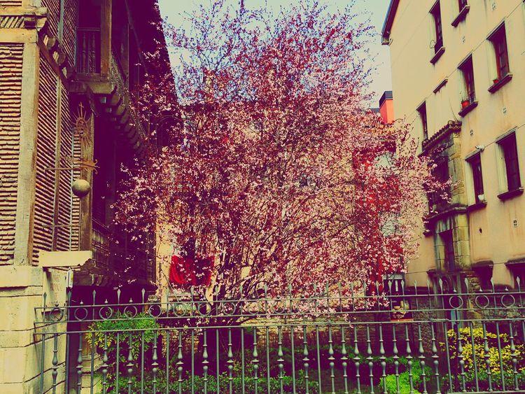 Primavera! First Eyeem Photo