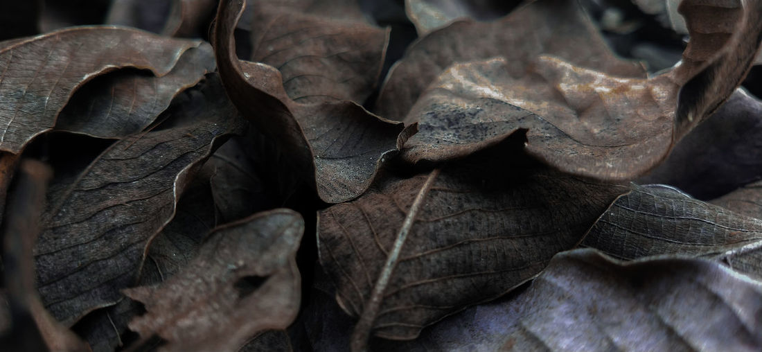 Close-up of dried leaves on plant