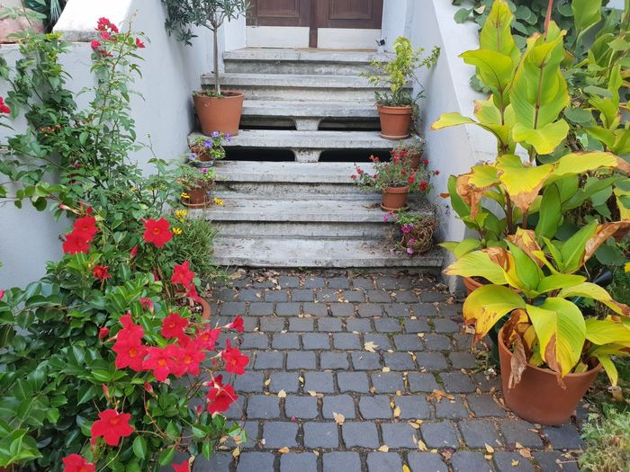 stairs Autumn colors Stairs Flower Pots Flower Leaf Plant Stairway Steps