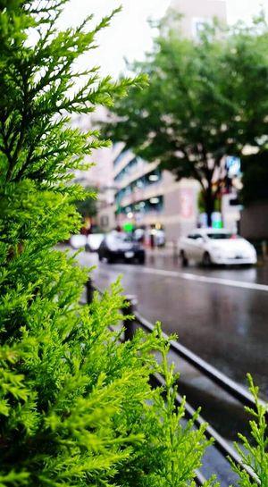 Hello World Enjoying Life Spacetime Ladyphotographerofthemonth Plantlife Plantporn Macro Nature Fukuoka City  Rainy Day In Fukuoka Traveling In Fukuoka Adapted To The City