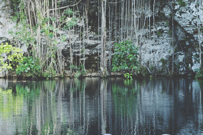 Beauty In Nature Cliff Day Forest Green Color Growth Lake Liana Nature No People Outdoors Plant Reflection The Great Outdoors - 2017 EyeEm Awards Tranquility Tree Water