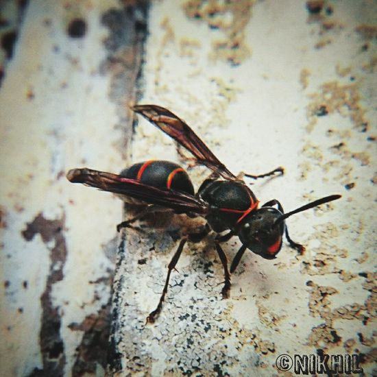 Insect Outdoors Close-up Nature Focus On Foreground Bugsofeyeem Bugslife Macro Bugs Insects Collection Insects Macro MobilePhotograpy Macro Photography Macro Insects Grassland Bee And Flower Wasp Macro Wasps🐝 Wasps Nest Wasp
