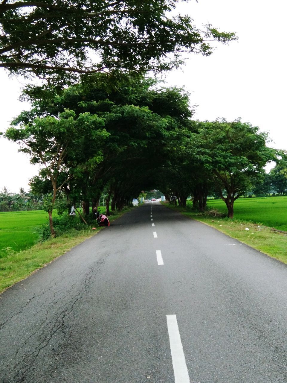 tree, road, the way forward, green color, transportation, diminishing perspective, day, nature, outdoors, asphalt, clear sky, growth, grass, tranquil scene, no people, tranquility, scenics, landscape, sky, beauty in nature