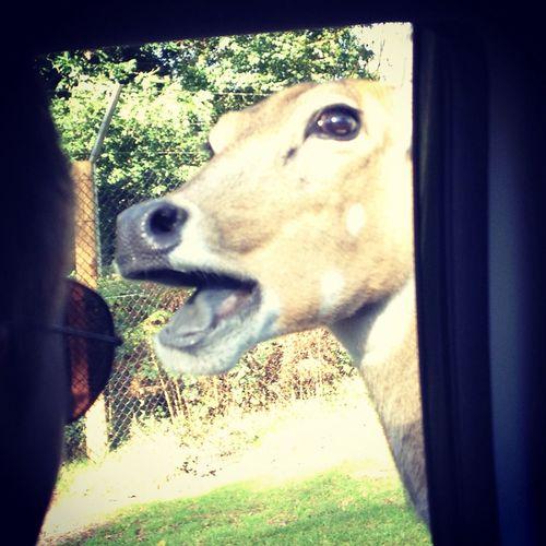 Animals Westmidlandssafari Funnyanimals