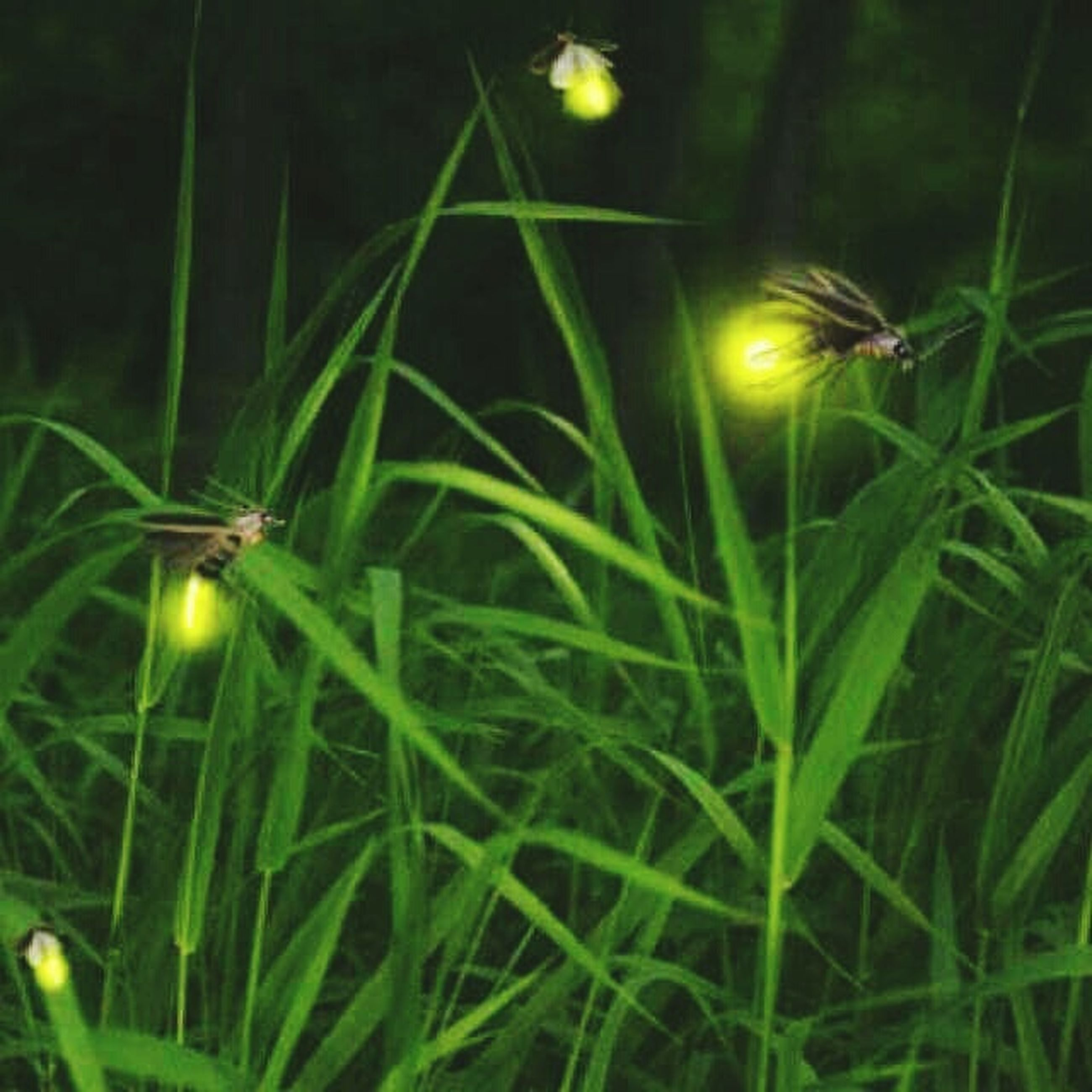 growth, green color, plant, grass, nature, close-up, beauty in nature, freshness, field, night, blade of grass, selective focus, green, tranquility, outdoors, fragility, focus on foreground, no people, leaf, growing