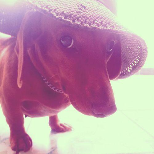 Mi princesa Jacky Hi! Enjoying Life Dachshund Doxies Glamour