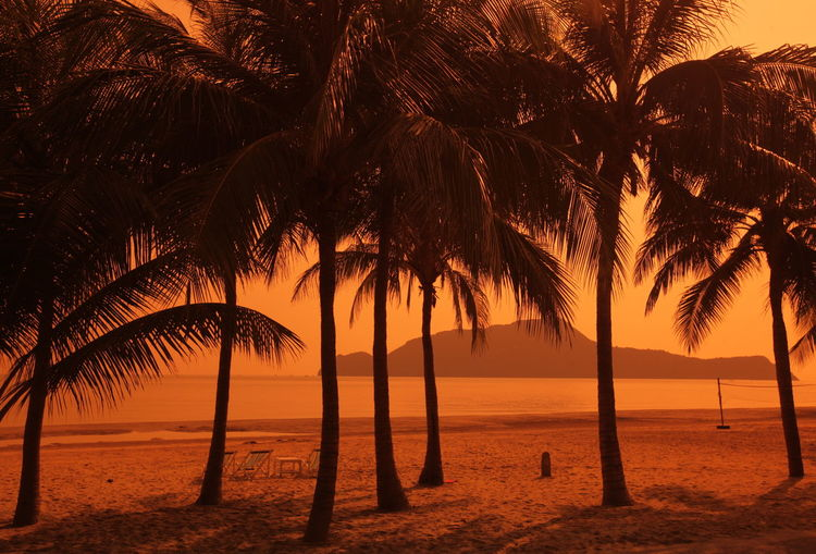 Palm trees on beach during sunset