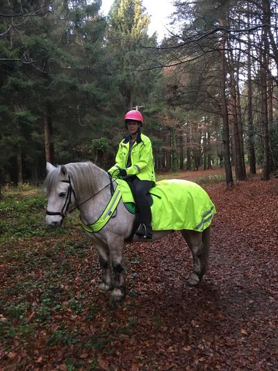 Highland Pony Horse One Person Domestic Animals Full Length Mammal Animal Themes Tree Riding Outdoors Forest Leisure Activity