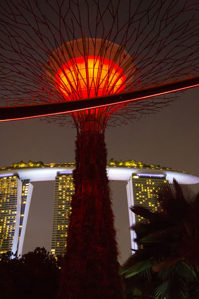 Gardens By The Bay Marina Bay Sands Architecture Blurred Motion Building Exterior Built Structure Celebration City Decoration Glowing Illuminated Lighting Equipment Low Angle View Motion Nature Night No People Orange Color Outdoors Plant Red Color Sky Tree