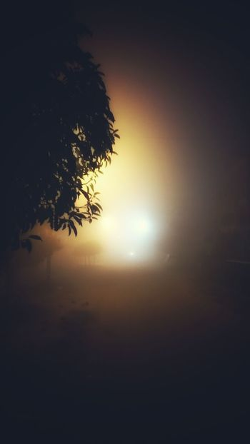 Nature Tree No People Sky Beauty In Nature Outdoors Nature Taking Photos Editing Photography Random Shots Check This Out Travel Photography Randam First Eyeem Photo The Way Forward Light And Shadow Foggy Night Fog One Man Only Only Men