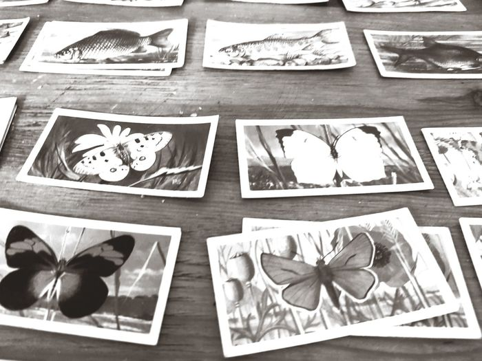 Butterfly Black Black And White Monochrome Collection Art Collection Vintage Vintage Cards Collectors Cards Collection Illustration Photograph Table No People Indoors  Day