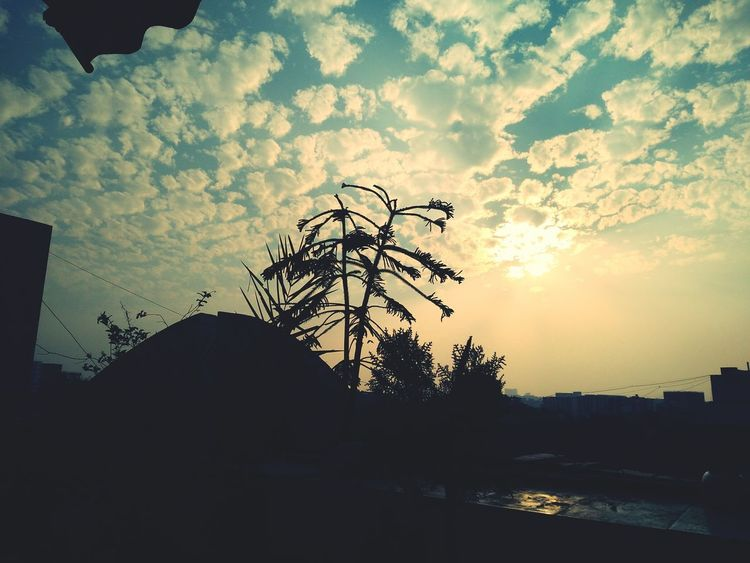 EyeEm Nature Lover House Plant Perspectives On Nature Sunset Eye4photography  EyeEm Best Shots - Nature Plant Shadow Eye4photography  EyeEm Gallery Nature_ Collection