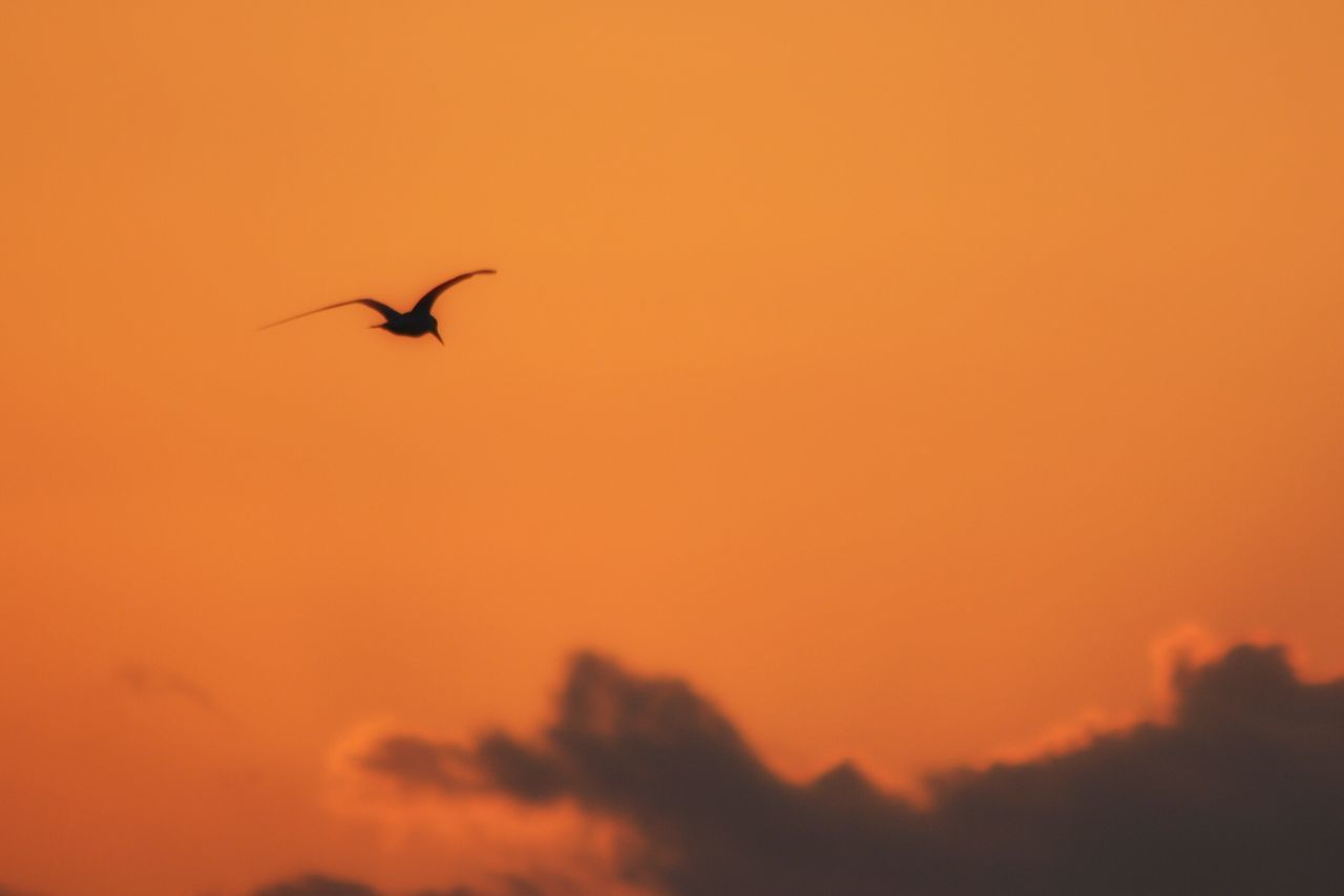 sunset, animals in the wild, bird, one animal, flying, nature, animal themes, animal wildlife, beauty in nature, silhouette, orange color, mid-air, spread wings, outdoors, sky, no people, low angle view, scenics, day