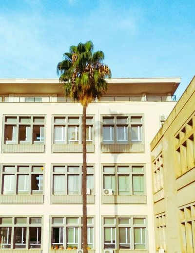 Not so sure it's already NovemberPalm Tree Building Exterior Windows Palermo, Italy University Campus Hot Day Outside