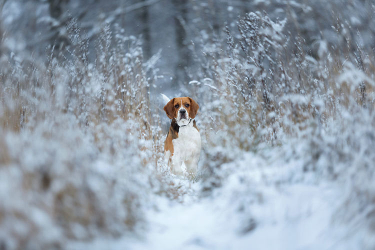 Portrait of dog running in snow