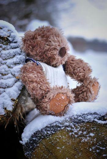 Teedy in snow