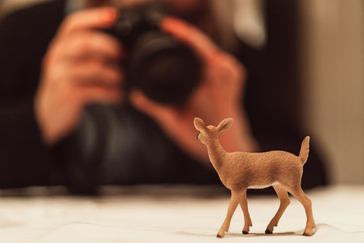 Close-up of deer toy