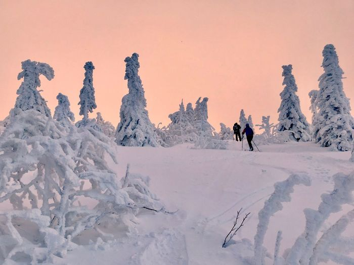 Skiing Arber Cross Country Skiing Snow Winter Cold Temperature Scenics - Nature Landscape Environment Beauty In Nature