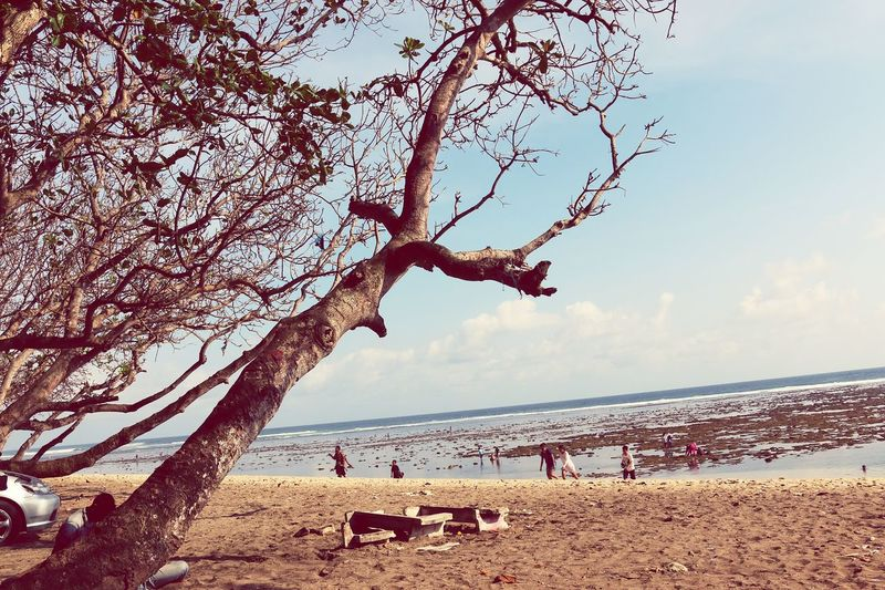 Beach Sand Sea Water Sky Vacations Tree Nature Outdoors Day Summer Horizon Over Water Beauty In Nature INDONESIA Branch Beauty In Nature No People Cloud - Sky Low Angle View Nature Tree Close-up High Angle View Sunlight Seaview