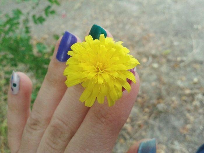 Beautifulflower  Flower Collection Flower Photography Flowerlovers Danelion Flowerofdandelion Dandelion Flowers Dandelion FlowerDandelion In Spring Dandelion Addiction