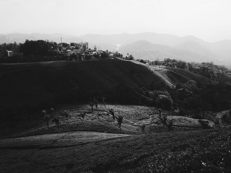 Black And White Landscapes India India Landscape Munnar Munnar India Munnar Kerala Munnar Tea Estates Tea Estates Black And White India Tea Estates Kerala Kerala India Landscape Landscapes Landscapes Of India Nature Outdoors Outdoors Photography Outdoors❤