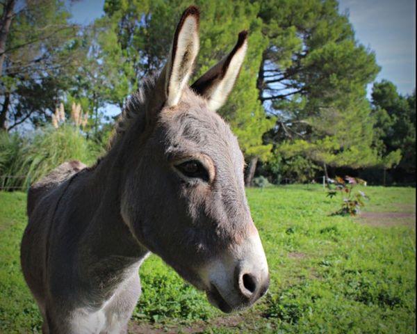 âne Trotro Animals Animal Wild