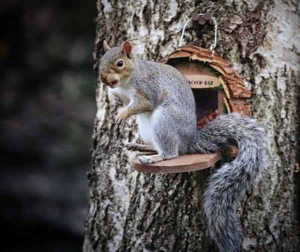 Close-up of squirrel sitting on bird feeder against tree