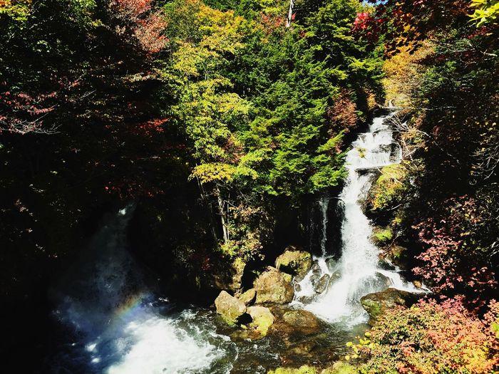 紅葉はじめ Scenery Autumn Waterfall Nature Trip