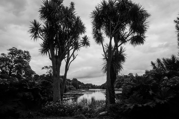Shillouette Trees Garden Photography Pond Blackandwhite Black & White Black And White Sky And Trees