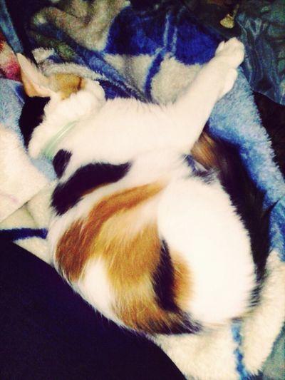my baby Sundae sleeping Kittie Cat Iloveher ♥