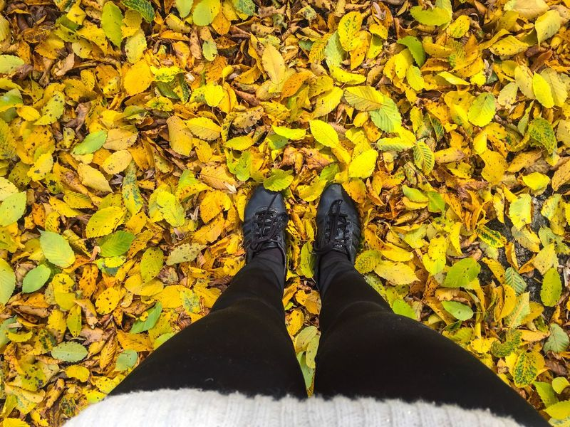 Autumn Leaves Fall Autumn Fallen Leaves Yellow Leaves Point Of View Feet View Sneakers Looking Down Leaves On The Ground (null)Low Section Standing Person Leaf Change Yellow Shoe Season  Personal Perspective Leaves Footwear Field Human Foot Day Vibrant Color Outdoors Fallen Surrounding Nature