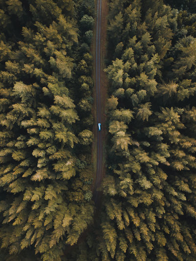 Architecture Drone  Beauty In Nature Car Coniferous Tree Day Foliage Forest Green Color Growth High Angle View Land Landscape Lush Foliage Nature No People Non-urban Scene Outdoors Pine Tree Plant Scenics - Nature Tranquil Scene Tranquility Tree WoodLand