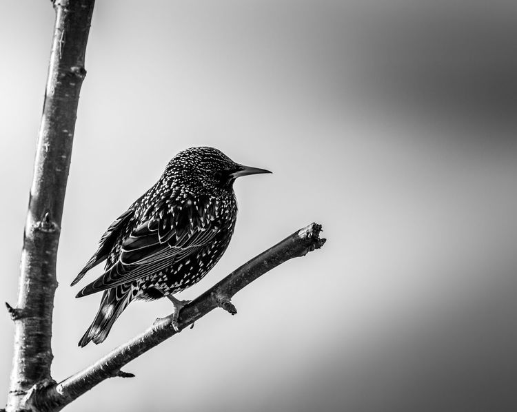 Animal Themes Animal Wildlife Animals In The Wild Beauty In Nature Bird Branch Clear Sky Close-up Day Full Length Low Angle View Nature No People One Animal Outdoors Perching Sky Tree Woodpecker