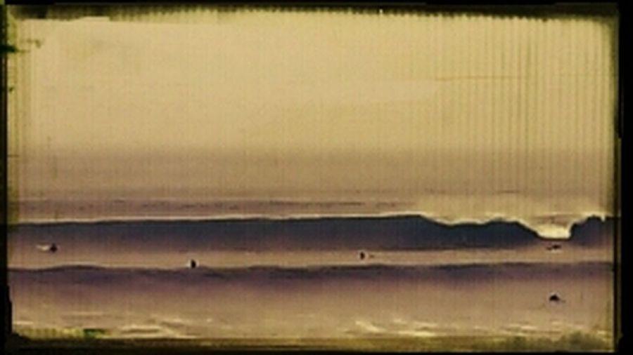 Sea Sepia