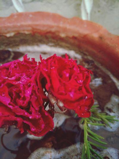 FlowerLove 🌸 Nature Photography Hello World Flowers, Nature And Beauty