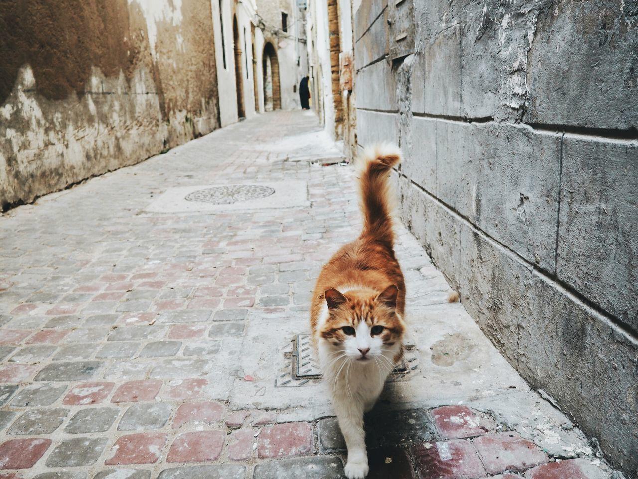 Portrait Of Cat Walking In Alley