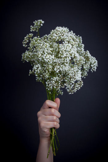 Flowers in front of a black background