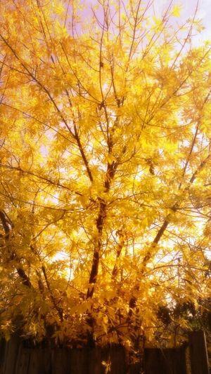 Walking Around Biutiful Nature Sun