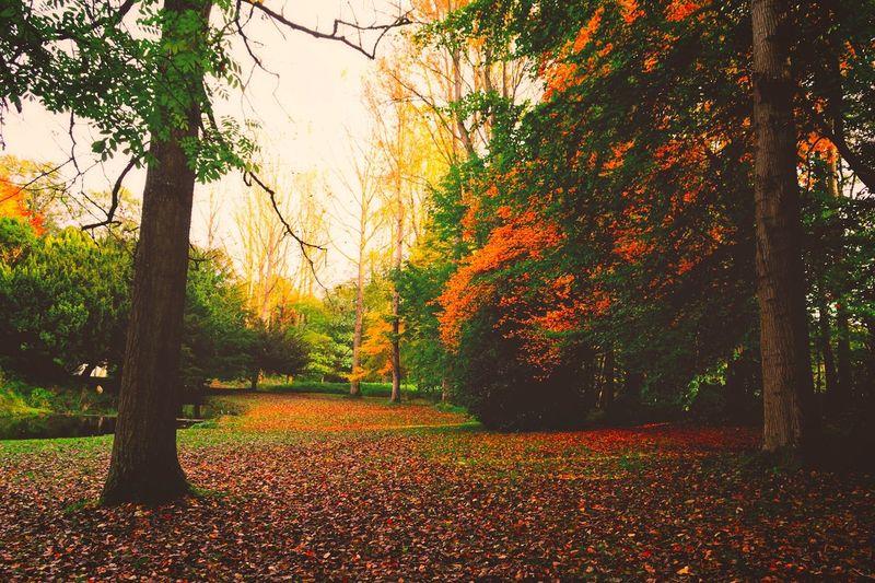 Autumn Colours Colour Nikon Autumn Nature Wildlife Trees Season  #Nature On Your Doorstep Beautiful