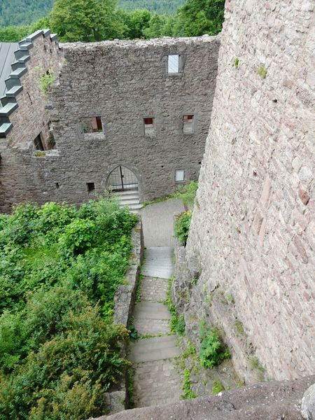 High Angle View Day Growth Green Color No People Outdoors Nature Plant Grass Castle Burg Ancient Architecture Ancient Alte Burg Baden-Baden Baden Baden Germany Baden Baden Stairs Treppe Steinmauer Stone Wall Ruine Ruins Ruined Building