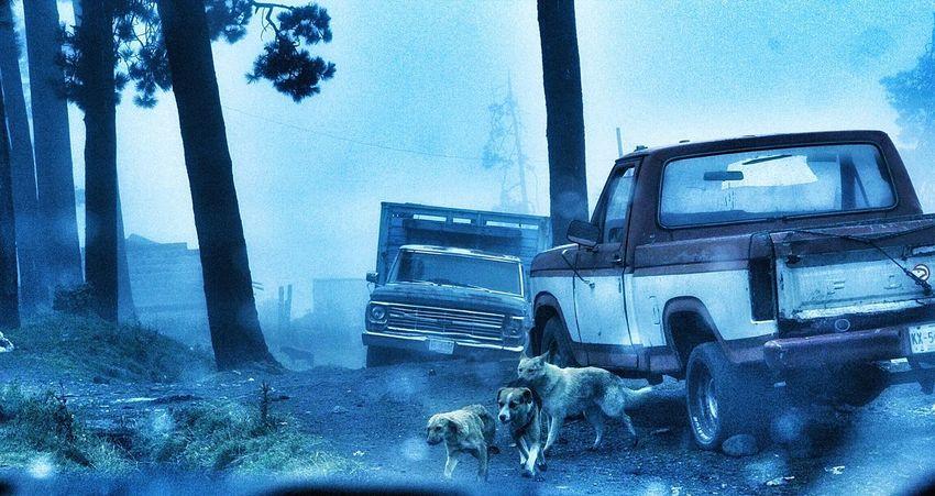 Tres tristes perros Ganjareta Momento De Ocio Taking Photos Jauria Perros  Dog Dogslife Tres Amigos