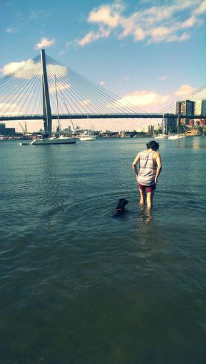 My boys Staffy Max Boyfriend ANZAC Bridge