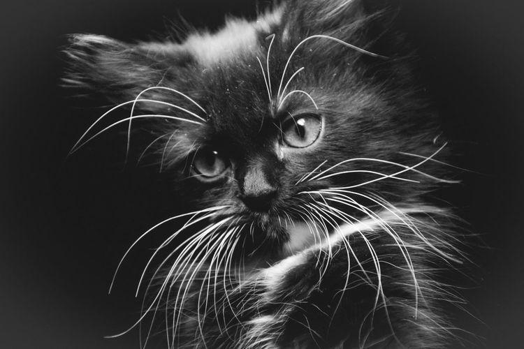 Кися Cat